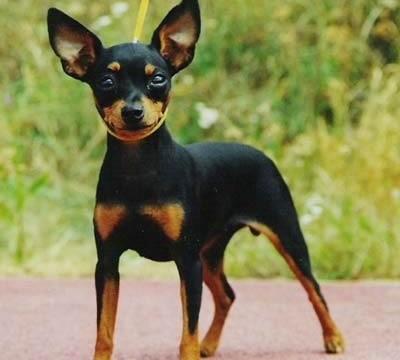 Přehřátí psa - (hypertermie)