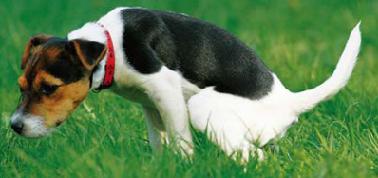 jak odnaučit psa čůrat doma