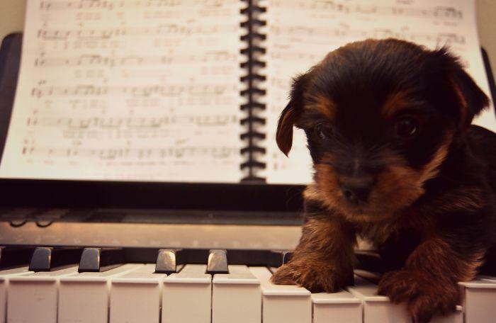 lekce na klavir