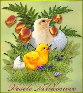 přání k velikonocům Vajíčko a kuřátko
