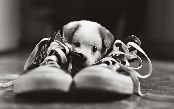 pejsek v botách