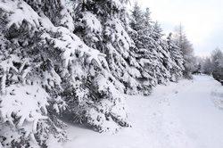 Počasí na leden 2015