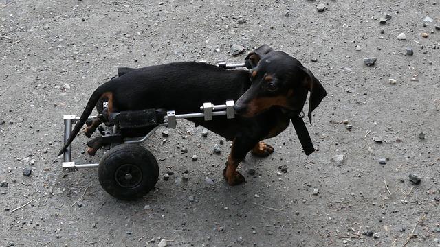 poranění páteře u psa