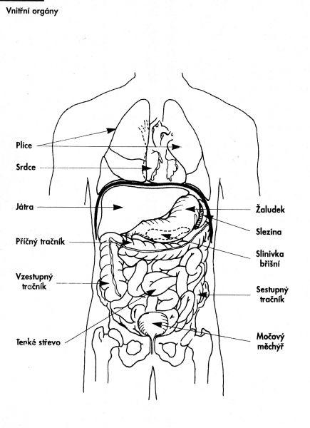 Slinivka umístění v těle